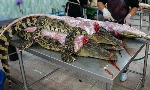 thịt cá sấu khô